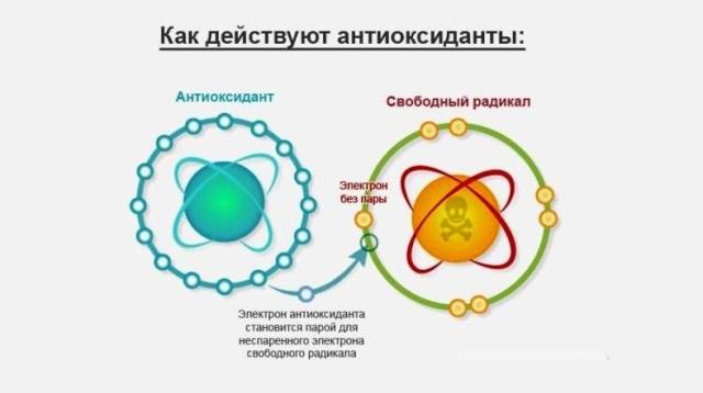 Антиоксиданты - природный щит для организма