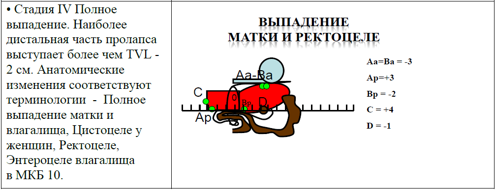 Стадии ВЖПО