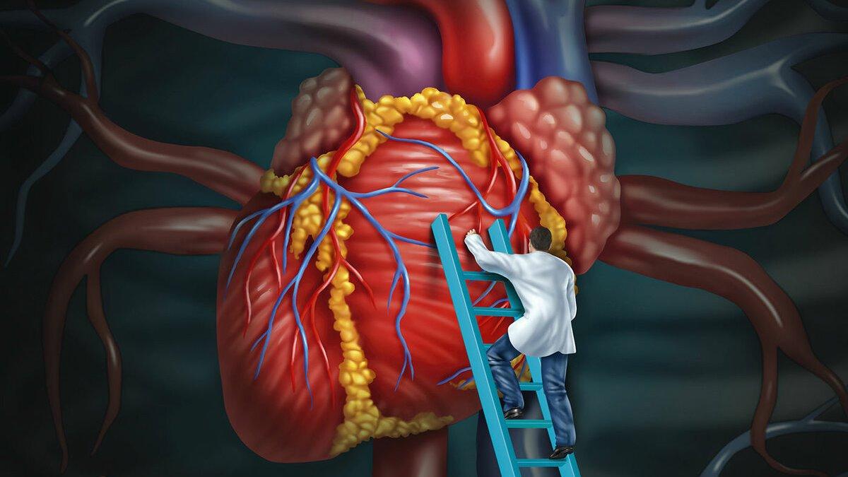 Повышен холестерин в крови, как понизить уровень до нормы