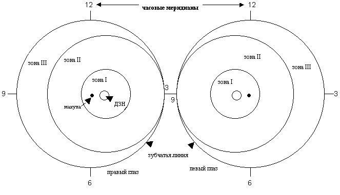 Изображение локализации и протяженности ретинопатии недоношенных