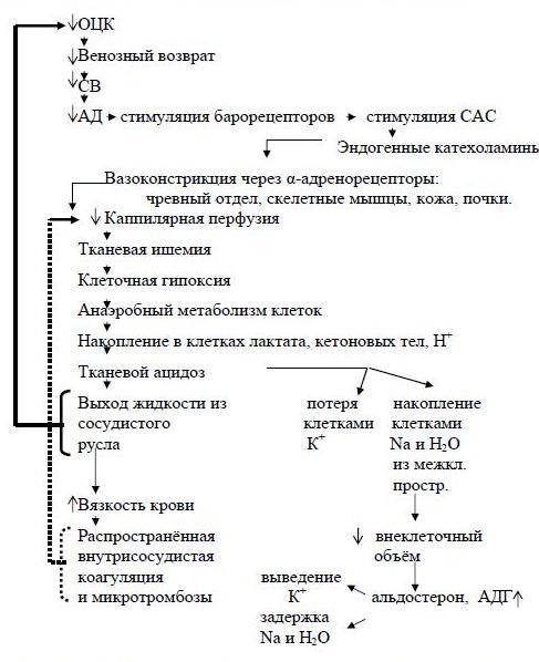 Последовательность изменений в организме при снижении ОЦК