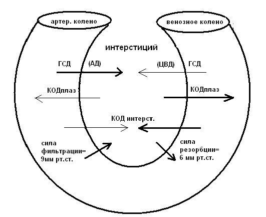 Баланс факторов, определяющих движение жидкости на капиллярном уровне