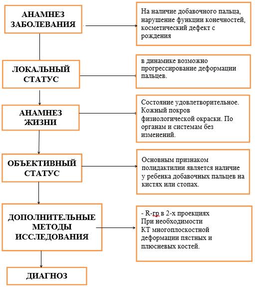 Диагностический алгоритм. Полидактилия