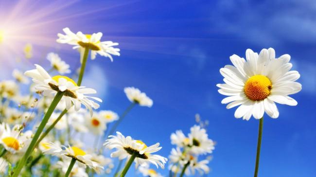 Солнечный свет наполняет наш организм энергией