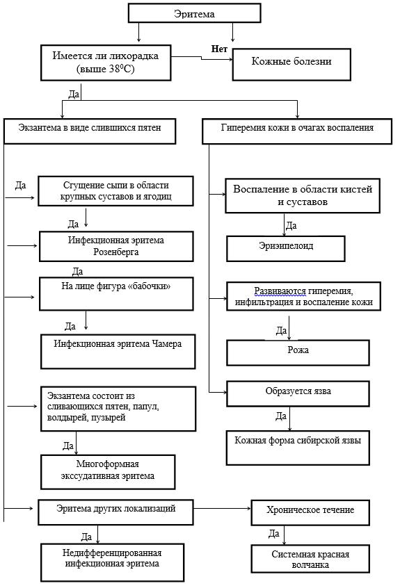 Алгоритм диагностического поиска при наличии у больного эритемы