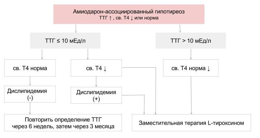 Алгоритм лечения амиодарон-ассоциированного гипотиреоза
